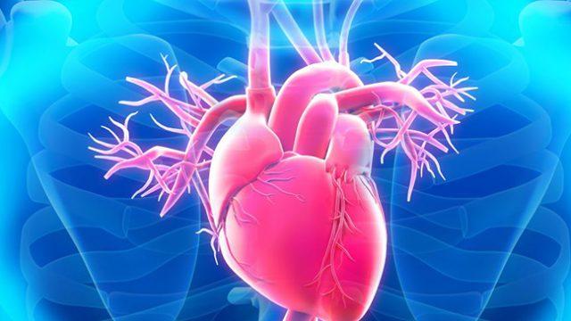 Вече създадоха човешко сърце на 3D принтер